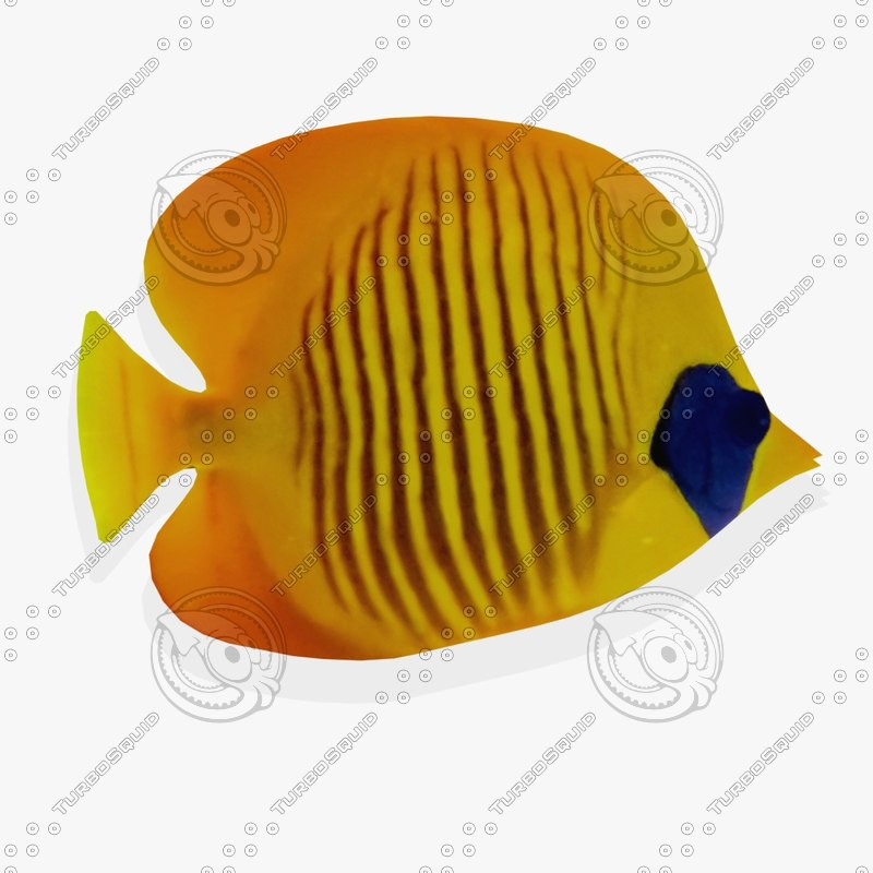 3ds wall tropical fish fg