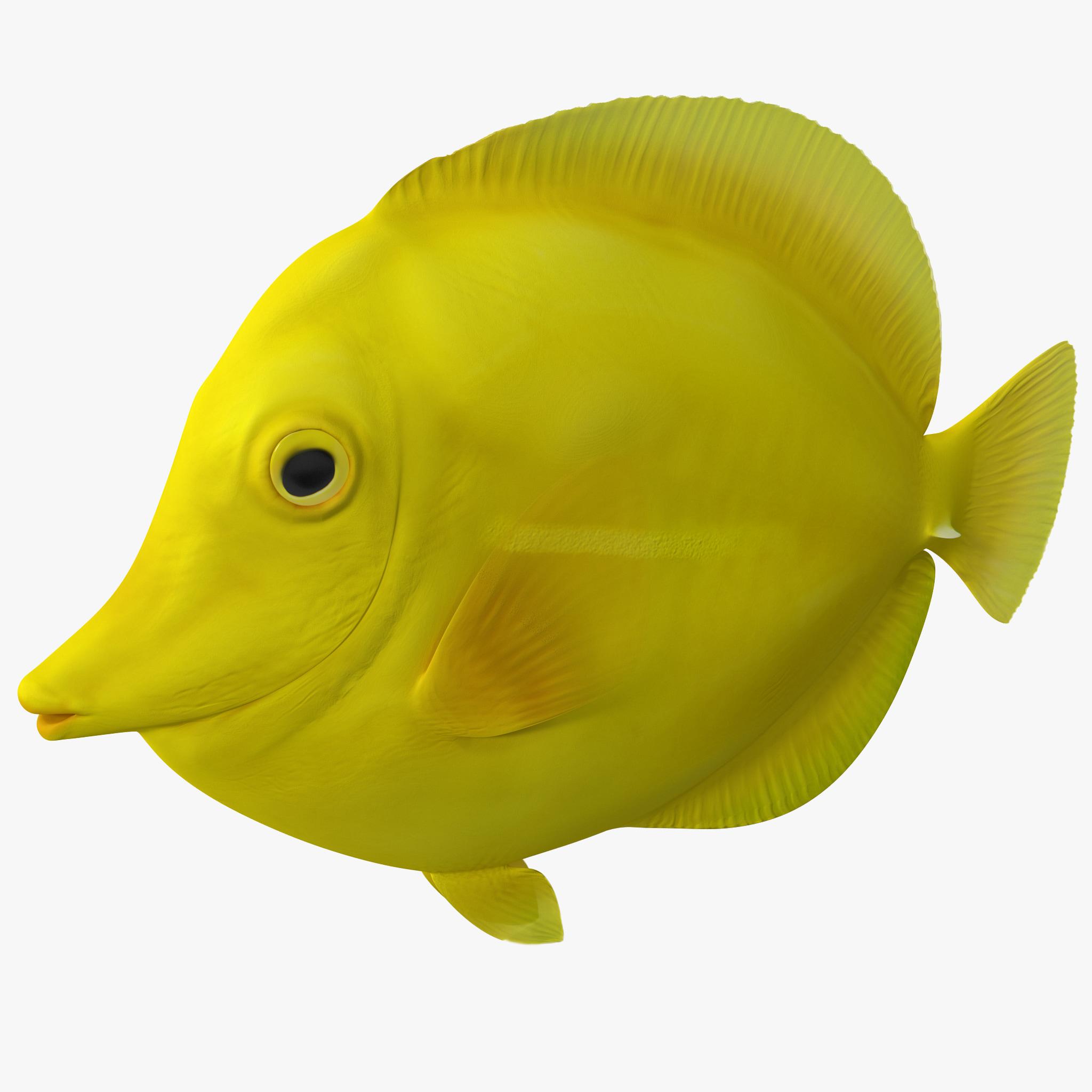 3d model yellow tang