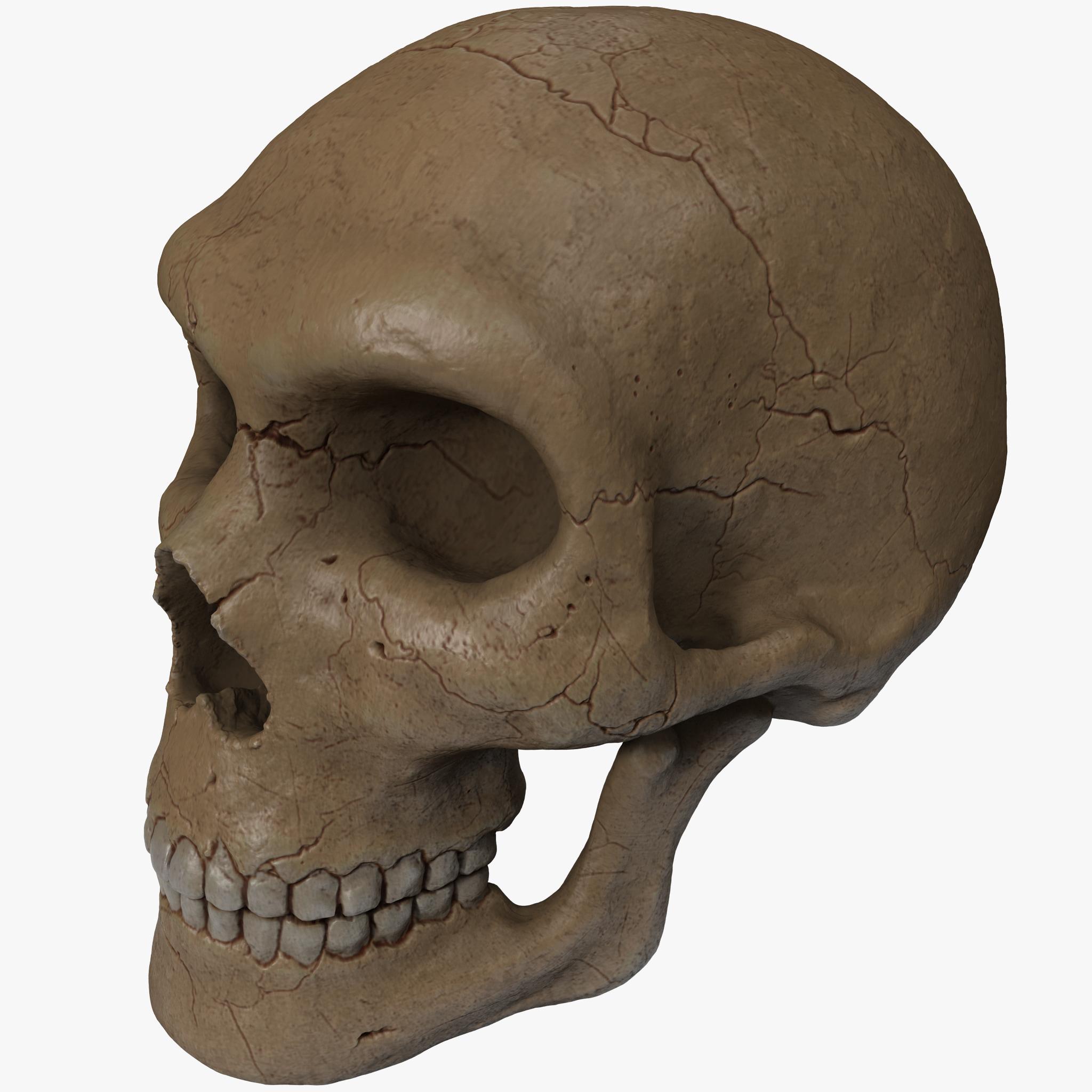 human skull 2 3d c4d
