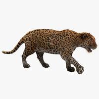 Jaguar Pose 1 Fur