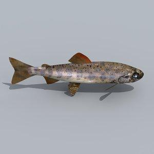 amago trout 3d model