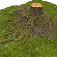 Roots With Tree Stump Hillock