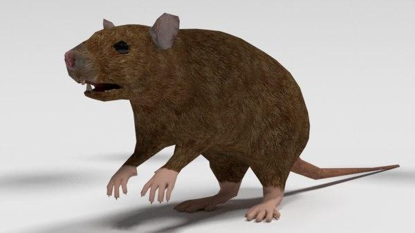 3d rat animals