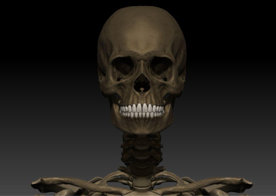 3d model human skeleton male