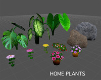 Home Plants textured