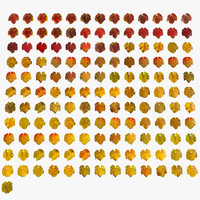 Red Yellow Colourful Wine Autumn Fall Ivy Plant Collection Set