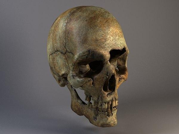 bones old man skull human 3d c4d