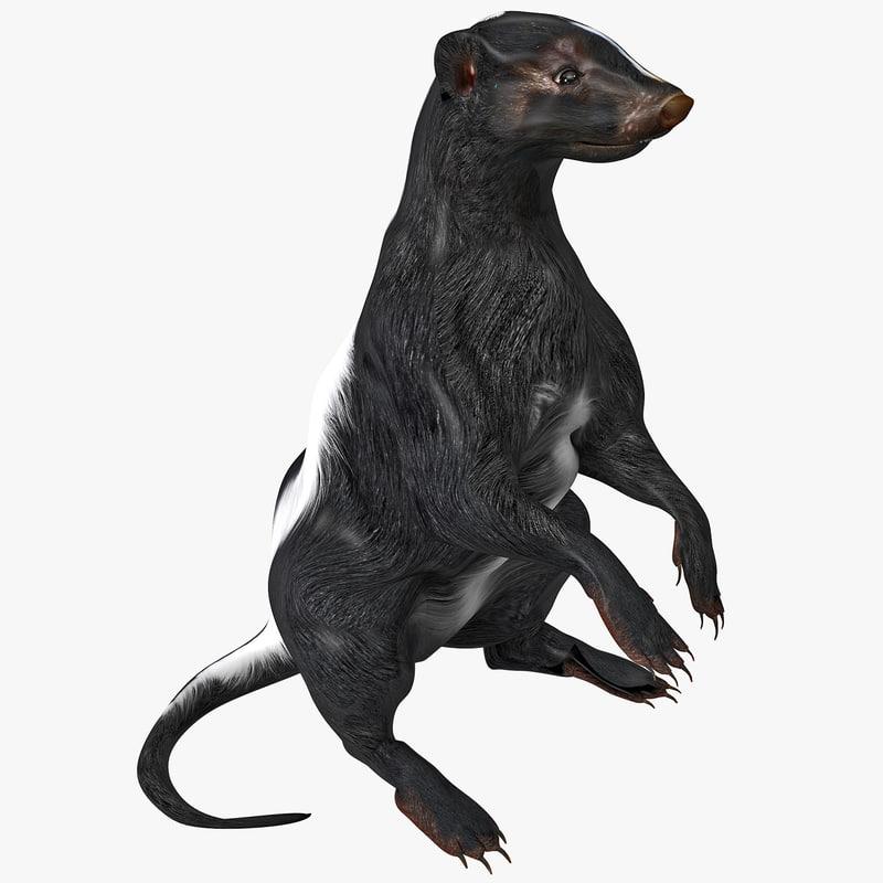 skunk pose 4 3d model