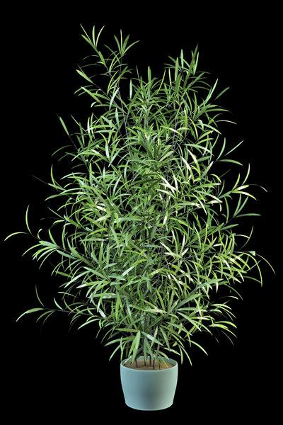asparagus large 3d model