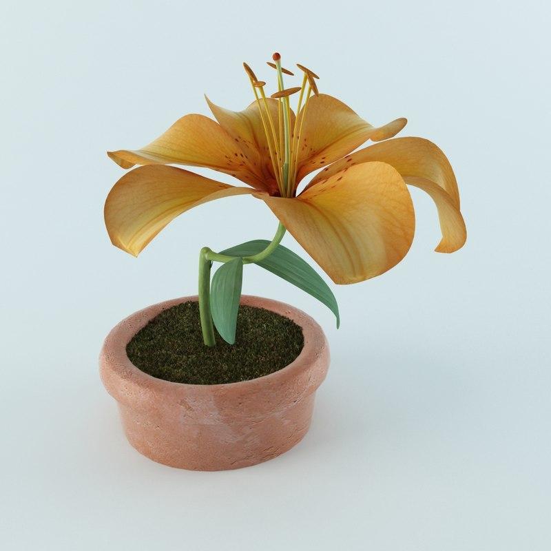 3d model of lilly flower