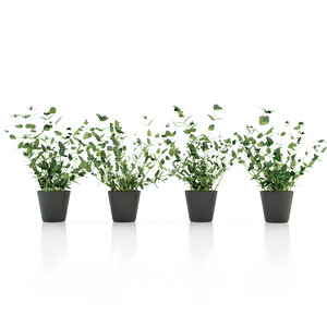 mint pot plant 3d model
