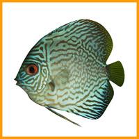 discus fish 3d obj