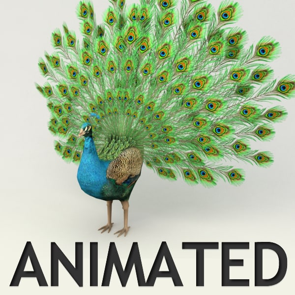 rigged peacock animation 3d max