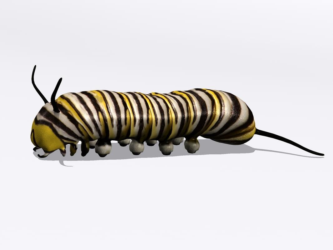3d monarch butterfly larva model