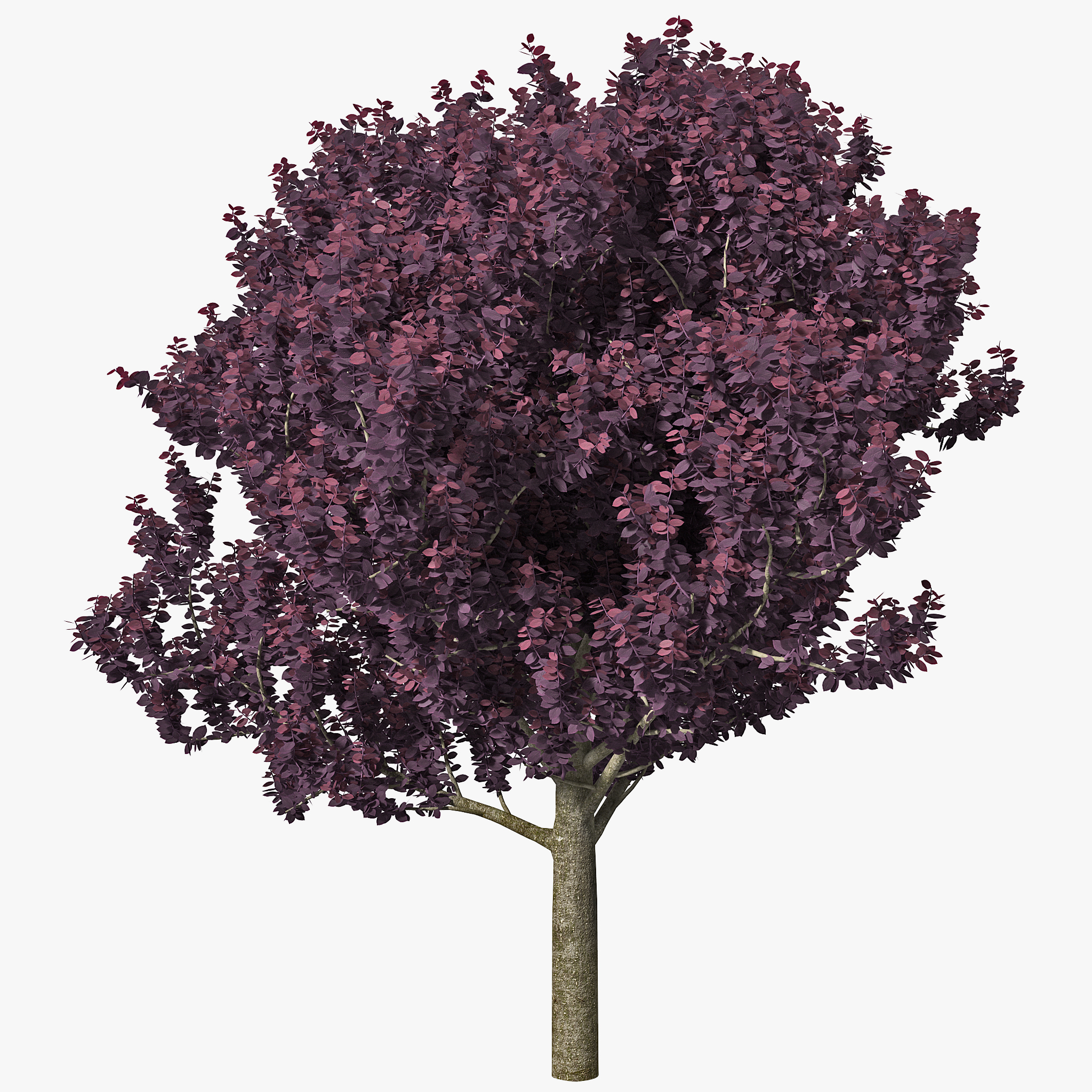 3dsmax Purple Leaf Plum Tree