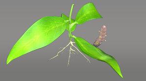 orobanche broomrape parasitic obj
