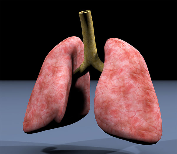 3dsmax lungs