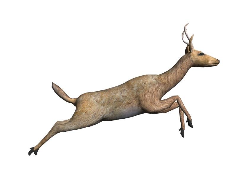 3d deer doe stag