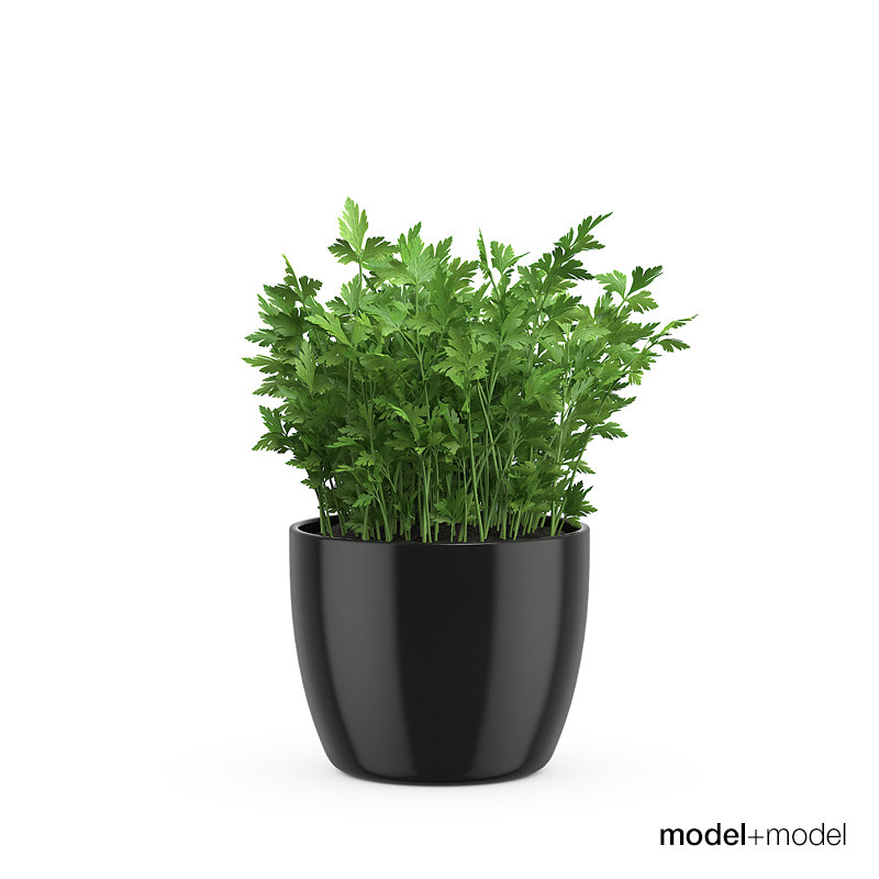 3d parsley pots accessories