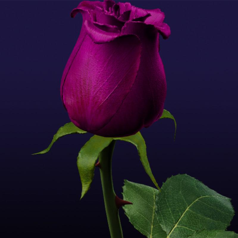 purple rose 3d model