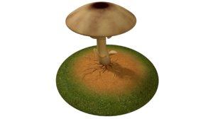 mycelium fungus fungi 3d model