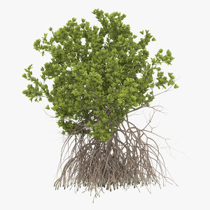 3ds max mangrove tree