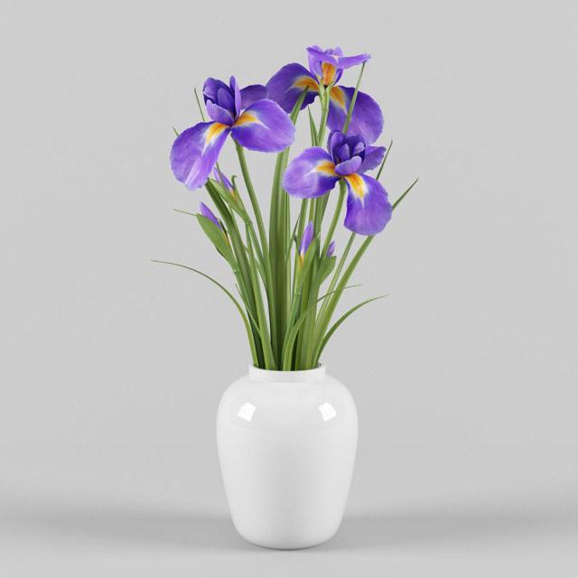 Kết quả hình ảnh cho a vase of Iris