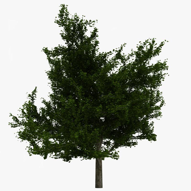 ginkgo tree 3d model