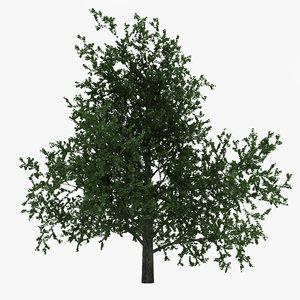 platanus tree c4d