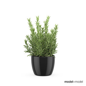 3d model rosemary pots accessories
