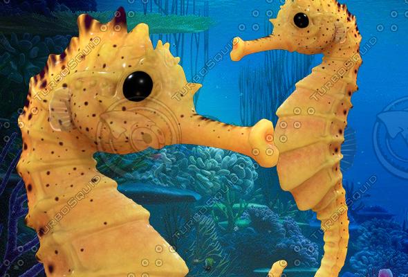 3d model seahorse sea