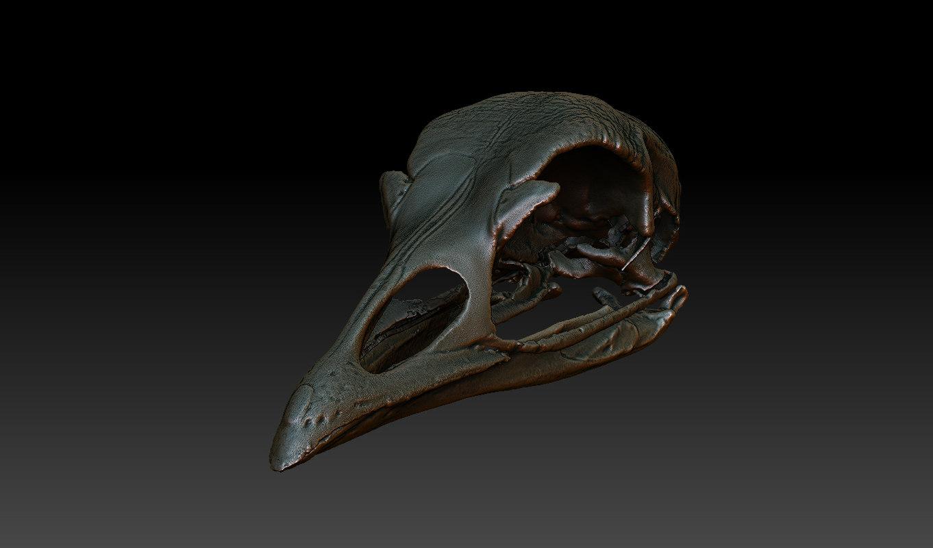 3d model skull turkey