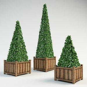 3d pyramidal boxwood shrubs