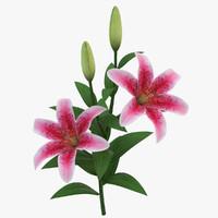 Branch Lily