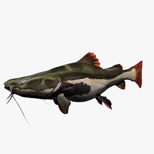 catfish red tail 3d max
