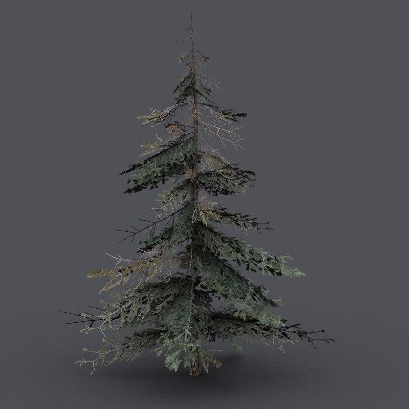 3d model spruce tree