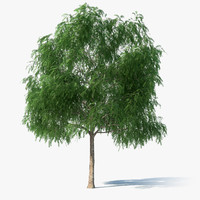 thornless honey locust tree 3d model