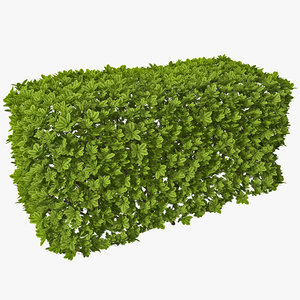 3d rectangular box hedge model