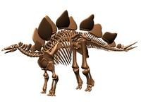 stegosaurus skeleton dinosaur 3d max