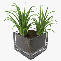 shrub dracaena square glass vase 3ds