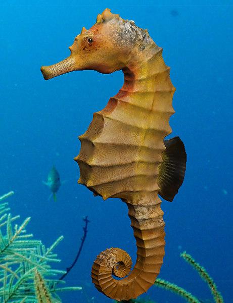 3d model seahorse horse sea