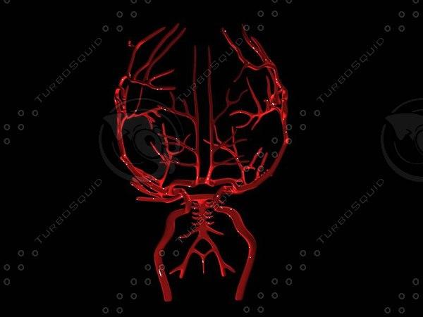 brain arteries 3ds