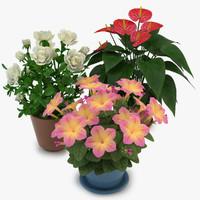 Flowers in Pot 01