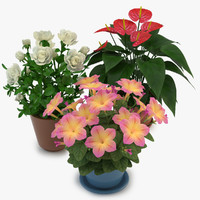 flowers pot model