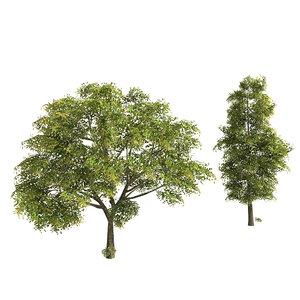 3d ash trees model