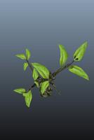 fbx tree