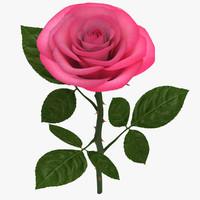 Rose Branch Pink 02