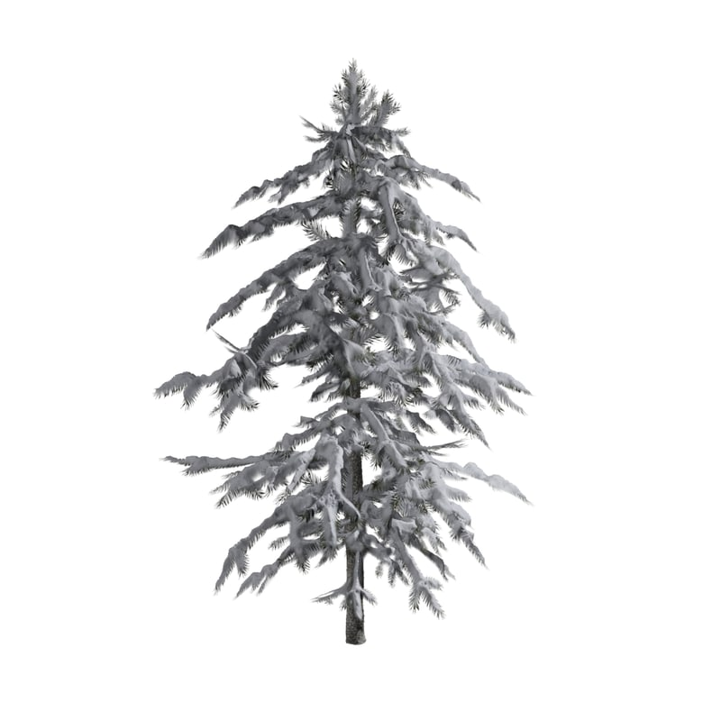pine tree covered snow max