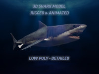 3D SHARK LOW POLY ANIMATED
