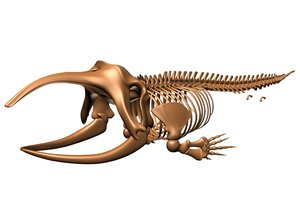 skeleton greenland whale animal skull 3d model